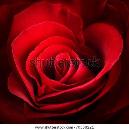 Valentine Red Heart Rose - stock photo