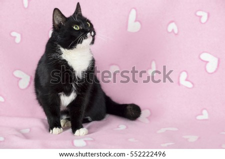 valentine's day cat on the pink background with hearts