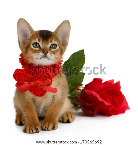 Valentine theme kitten with red heart and rose isolated on white background - stock photo