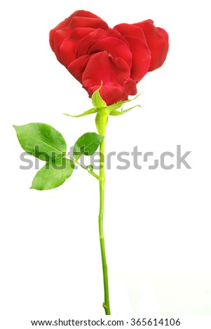 Valentines Day Heart Made of Red Roses Isolated on White Background. - stock photo