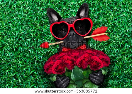 valentines french bulldog dog in love holding a cupids arrow with mouth ,wearing sunglasses,lying on meadow grass in park , with  bouquet of roses - stock photo