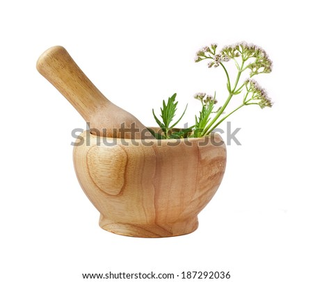 Valerian herb flower sprigs in a wooden mortar with pestle with flowers isolated on white background  - stock photo