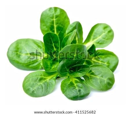 Valerianella locusta,corn salad,lamb's lettuce - stock photo