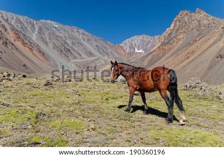 Vallecitos provincial park, Mendoza, Argentina. Horse resting in the valley - stock photo