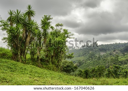 Valley in Costa Rica with coffee planted on the hillsides. - stock photo