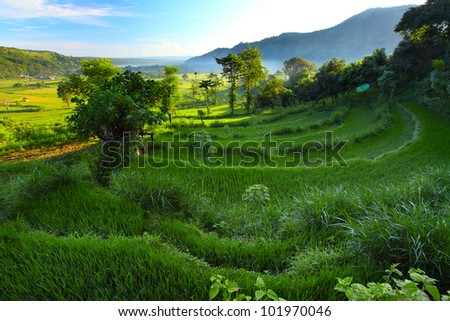 Valley with rice fields and trees in morning haze at sunrise light. Bali - stock photo