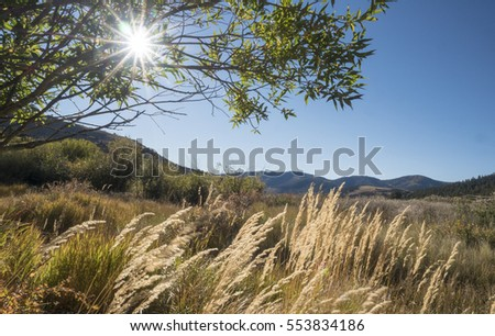 Valley with tall grass and sunbeams through foliage