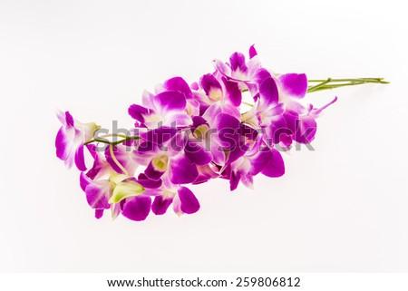 vanda orchid on white background - stock photo