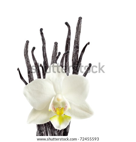 Vanilla beans and orchid flower - stock photo