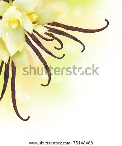 Vanilla Pods and Flower border design - stock photo
