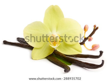 Vanilla sticks and yellow orchids on the white background