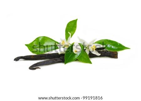 Vanilla sticks, vanilla flowers, vanilla bundle. Composition of vanilla sticks and vanilla flowers. Vanilla isolated. Vanilla sticks on the white background. - stock photo