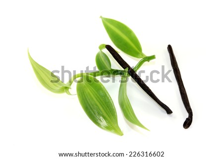 Vanilla sticks with green vanilla leaves on a light background