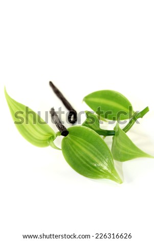 Vanilla sticks with vanilla leaves on a light background - stock photo