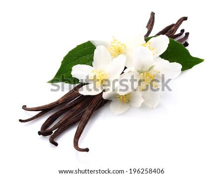 Vanilla with jasmine - stock photo