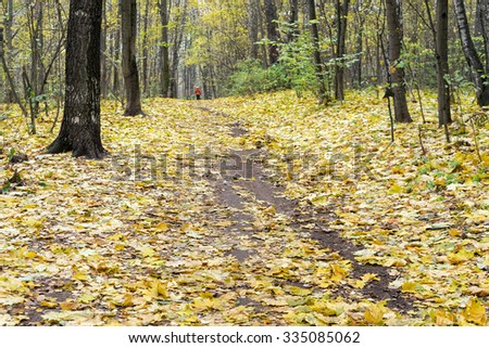 Vanishing footpath in forest covered by autumn leaves in Indian summer. Moscow, Russia.