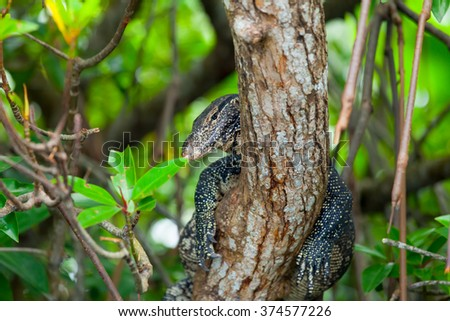 Varanus on a tree in Sri Lanka forest  - stock photo