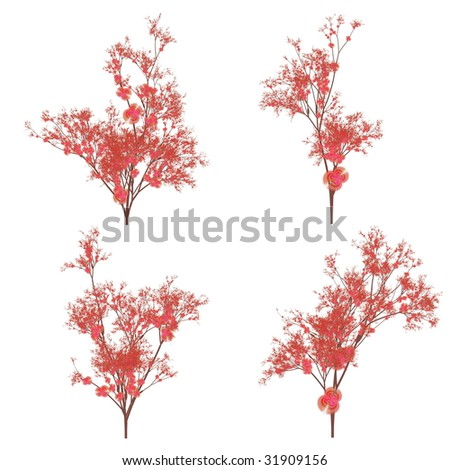 Variations of a cherry blossom plant - stock photo