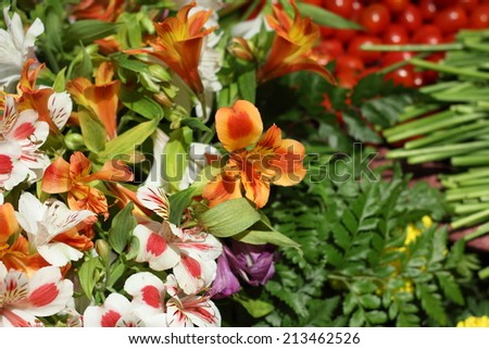 variegated bright colorful Alstroemeria Lily Spray