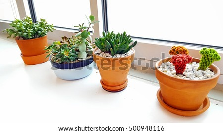 variety of cactus plants in pots on white window sill