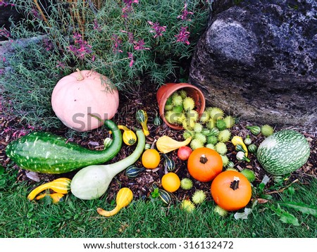 Variety of colorful autumn vegetables decorating a garden. - stock photo
