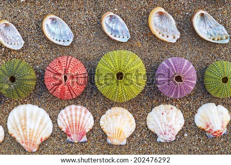 variety of colorful sea urchins and shells on the beach - stock photo