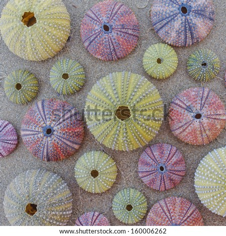 variety of colorful sea urchins on sand beach, natural background