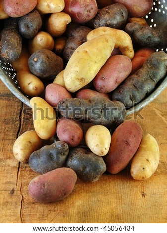 Variety of fingerling potatoes spilling out of a colander. - stock photo