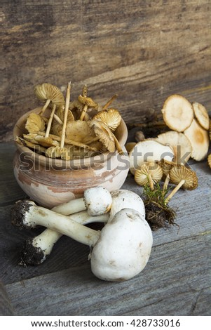 Variety of forest Mushrooms. selective soft focus image  - stock photo