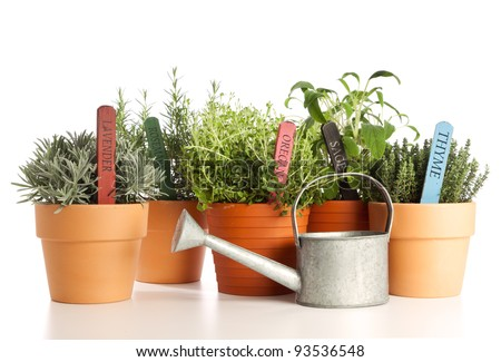 variety of potted herbs and watering can isolated on white