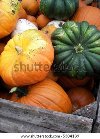 variety of pumpkins - stock photo