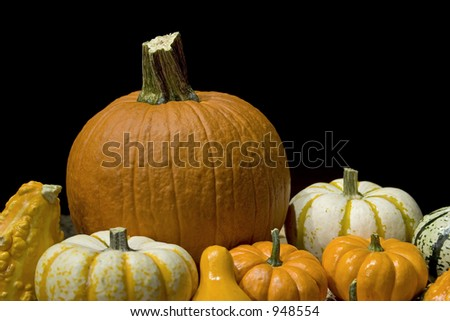 Variety of pumpkins and gourds on a black background.