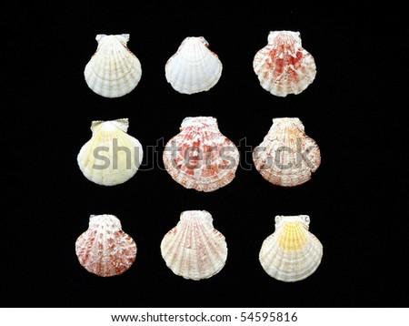 variety of sea shells on black background - stock photo