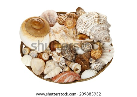 variety of seashells in basket isolated on white - stock photo