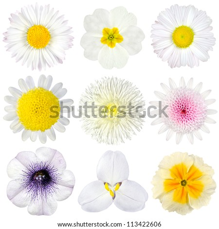 Various Collection of White Flowers Isolated on White Background. Set of Nine Daisy, Gerber, Marigold, Osteospermum, Chrysanthemum, Strawflower, Cornflower, Dahlia Flowers - stock photo