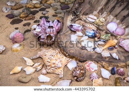 Various colorful beautiful shells on the beach.