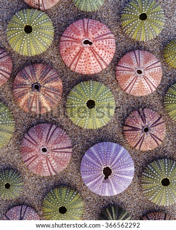various colorful sea urchins on wet sand beach