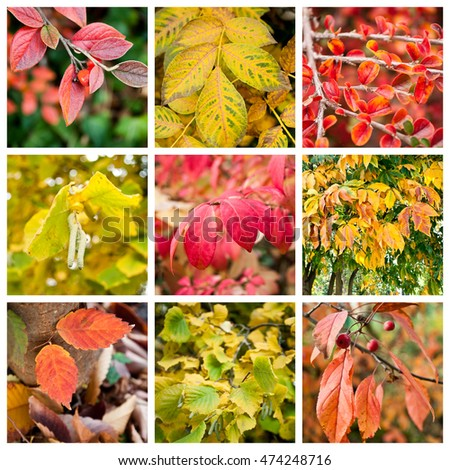 various colors of nature collage