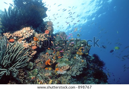 Various crinoids and anthias decorate this shallow reef in the Solomon Islands