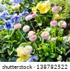 Various different  spring flowers with vivid colours - stock photo