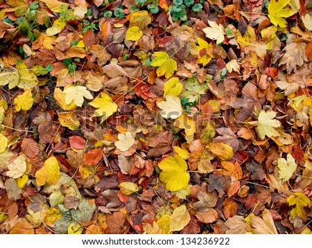 various fall leaves - stock photo
