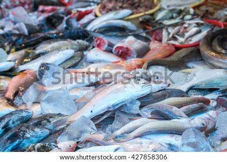 Various Fish prepare for sell in fish market. Shoppers visit Fish Market and Select fish to buy. sea bass and bream fresh fish at the market. Image in neon light in natural fish market in Asia - stock photo
