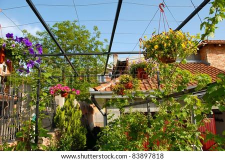 various garden flowers blooming in flowerpots outdoor - stock photo