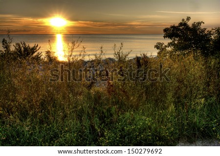 Various grass plants and wildflowers along the shore of Lake Erie at sunrise from Metzger Marsh.  - stock photo