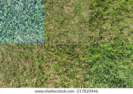 Various Grass Types 1 - stock photo