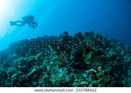 Various hard coral reefs in Gorontalo, Indonesia. There are various species hard coral reefs. Reef fishes are swimming above the coral reefs.