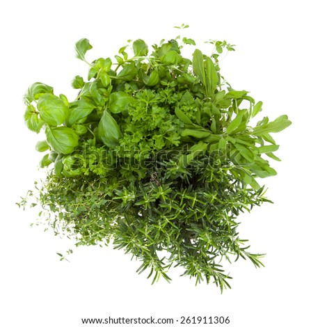 Various kind of fresh herbs isolated on white background - stock photo