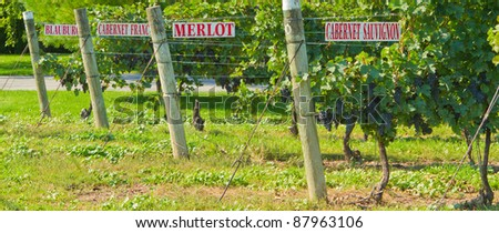 Various names of Wine on signs on grape vines in Niagara wine country, Niagara on the Lake, Ontario, Canada - stock photo