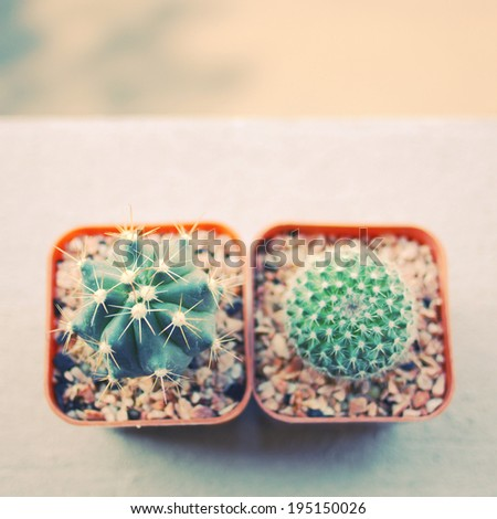 Various of cactus for decorated with retro instagram filter effect  - stock photo