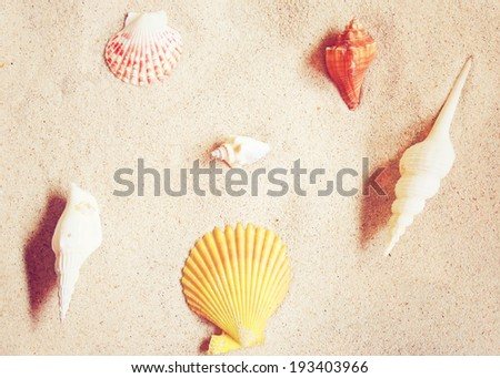 Various of sea shells on sand with retro instagram filter effect - stock photo